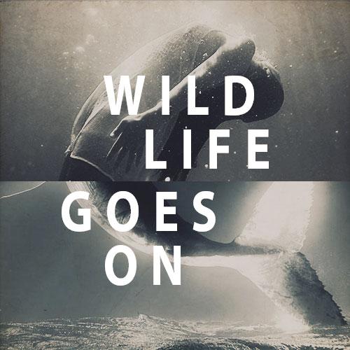Wildlifegoeson